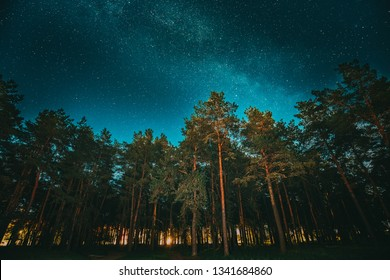 Green Trees Woods In Park Under Night Starry Sky With Milky Way Galaxy. Night Landscape With Natural Real Glowing Stars Over Forest Or Park At Summer Season. View From Eastern Europe At Spring Season.