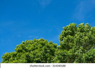Green treetop blowing in blue sky