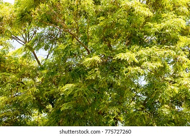 green treetop and blue sky