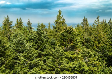 Green treetops with blue sky