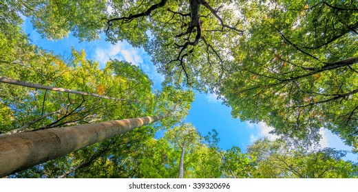 Green treetops and blue sky in summer