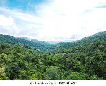 Green treetops on the mountain against blue sky. Natural rainforest background.