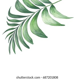Green tropic palm leaves composition isolated over white. Watercolor botanical illustration.