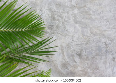 Green tropical background with palm leaves on concrete floor. Tree leafs texture for decoration. Natural.