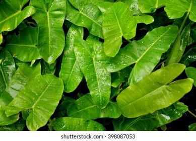 green tropical leaf close-up