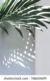 green tropical leaf with shadow on white corner wall.