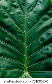 Green Tropical leaves background Plant Texture