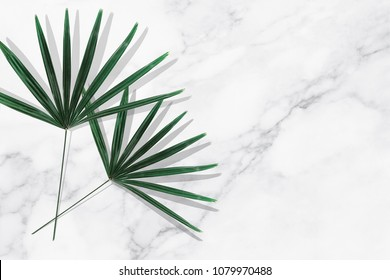 Green tropical leaves on white marble background.