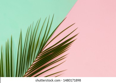 Green Tropical leaves palm tree on color background with space for text. Top view, flat lay. Sunny summer Still life. Bright Sweet fashion Style. Surreal, Minimal Fun.