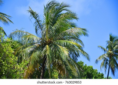 Green tropical palm tree with perfectly blue sky