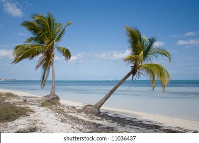 Green tropical palm trees on a beach near blue water and a blue sky in a background