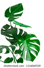 Green tropical plant stem and leaves isolated on white background