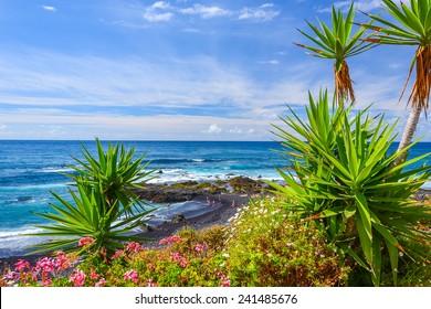 Green tropical plants on beach in Puerto de la Cruz, Tenerife, Canary Islands, Spain