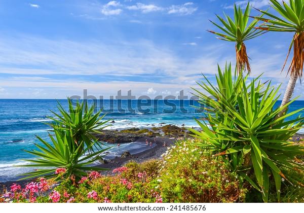 Grüne tropische Pflanzen am Strand in Puerto de la Cruz, Teneriffa, Kanarische Inseln, Spanien