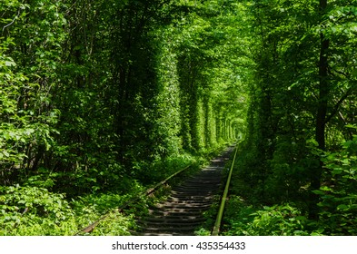 Green tunnel of love made without human help. Klevan, Ukraine