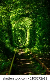 Green tunnel of trees in the forest . Tunnel of love. Klevan, Ukraine.