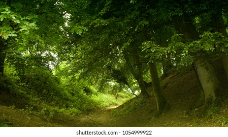 A green tunnel of trees in the forest on the way to Camelot