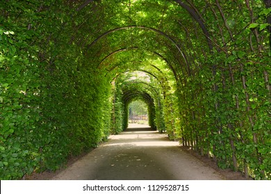 green tunnel of trees at the garden of the Rijksmuseum, Amsterdam in Netherlands