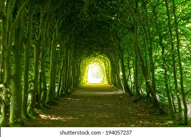 A green tunnel of trees with light at the end, on a nice summer's day in a park.