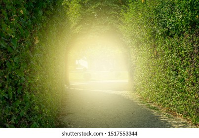 green tunnel of trees. road through tunnel of trees and light at the end of tunnel - concept