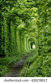 Green tunner in the forest. Love place.