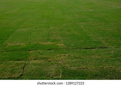 green turf grass texture background