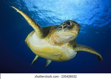 fc72991c Turtle Aquarium Images, Stock Photos & Vectors | Shutterstock