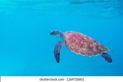 Green turtle by sea surface underwater photo. Sea turtle closeup. Oceanic animal in wild nature. Summer vacation activity. Snorkeling or diving banner template. Tropical seashore with sea tortoise