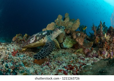green turtle with coral in background