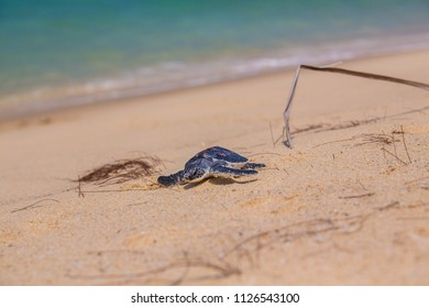Green turtle Culture and release to nature.