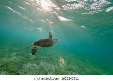 Green Turtle enjoying the ocean