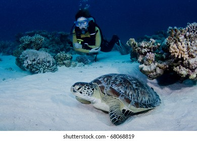 Green Turtle and female scuba diver in the Red Sea