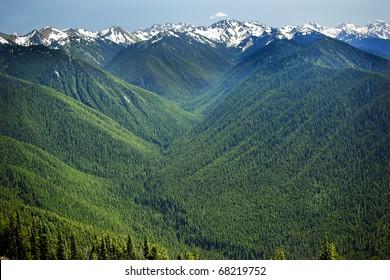 Green Valleys Evergreens, Snow Mountains Hurricane Ridge Olympic National Park Washington State Pacific Northwest  Ridge Line