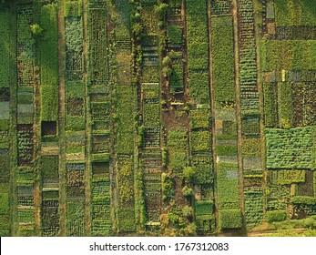 Green vegetable garden, aerial view Ukraine