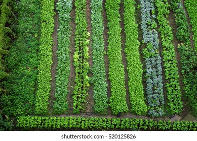 Green vegetable garden, top view