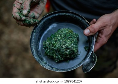 green vegetarian food from forest for survival