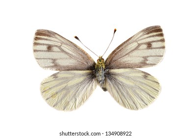 The Green veined white (Pieris napi) isolated