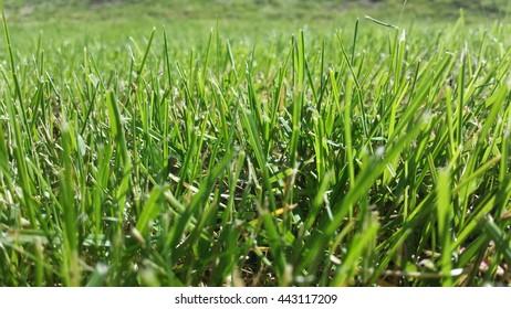 green vibrant grass in summer sunshine