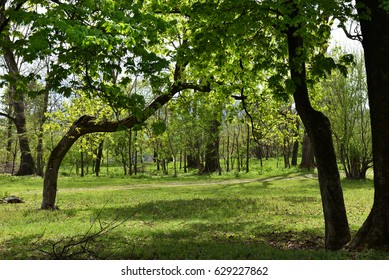 Green vibrant park. Abandoned arboretum in Transylvania