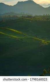 Green View of the tea garden