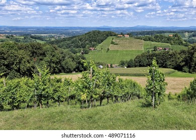 Green vineyards and the farms on the hilly landscape
