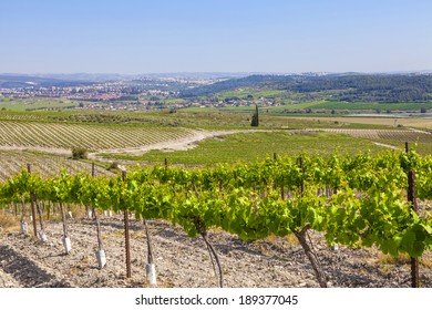Green vineyards and fields - typical view of agricultural valley landscape in Judaic mountains, Israel