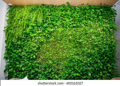 Green wall of different deciduous plants in the interior decoration. Beautiful vivid green leaf wallpaper and environment scene.