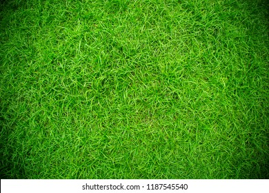 Green wall and green floor background of artificial turf For exterior design and business fairs.