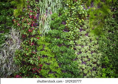 green wall with flora combination