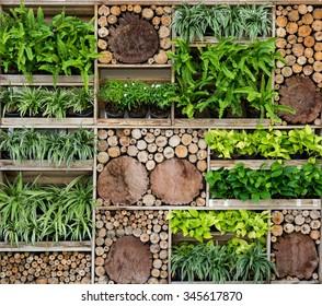 Green wall , Tree Wall