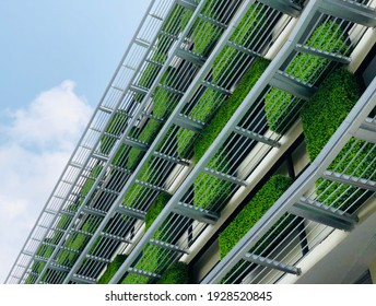 green wall, vertical facade garden with passive cooling and eco friendly strategies