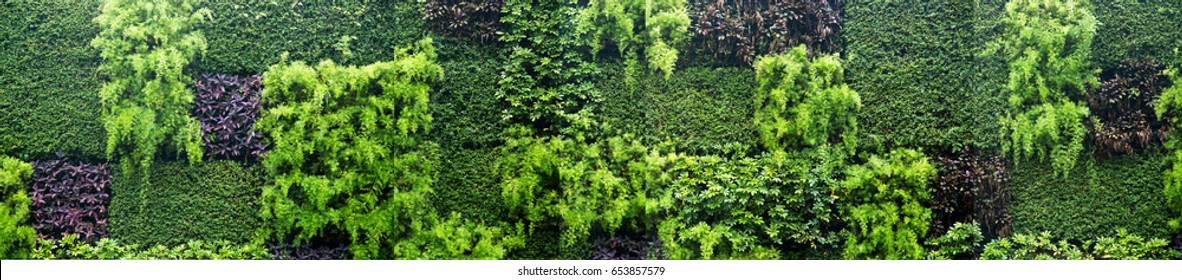 green wall/green background
