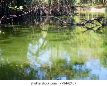 green water in a canal with dry branches