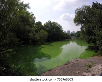 Green Water in Central Park Uptown NYC
